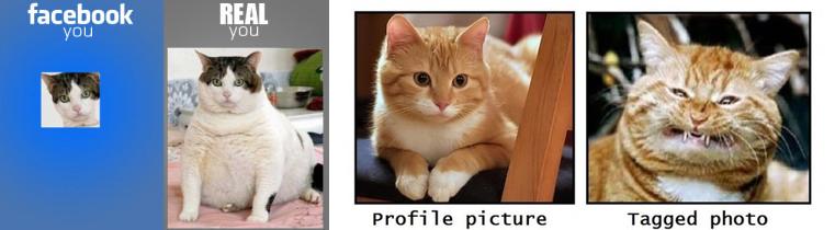 funny-cat-facebook-profile-pic-real-you-fb-you1-300x210